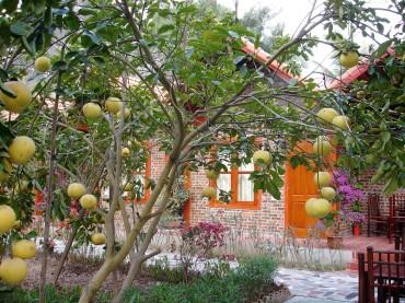 Grapefruit vor der