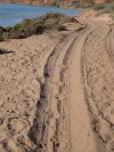Emu Spuren im Sand, hier läuft es sich bequemer