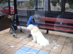 Hundepflege an der Haltestelle