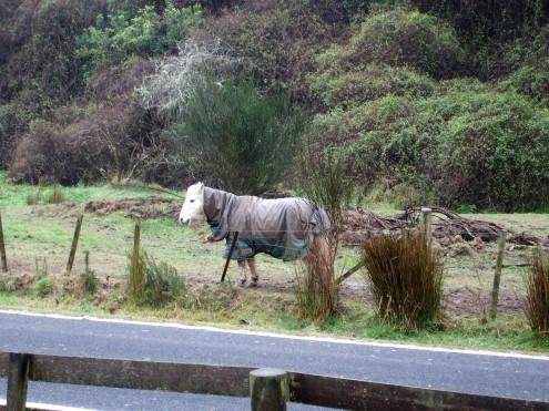 Wintermode für Pferde
