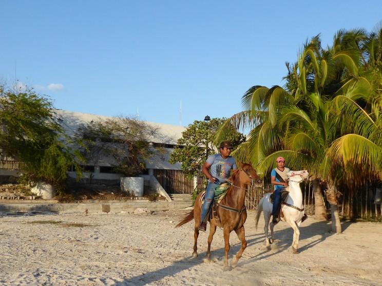 auch Pferde mögen den Strand