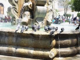 die Tauben mögen den Brunnen
