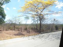 Butterblumenbaum