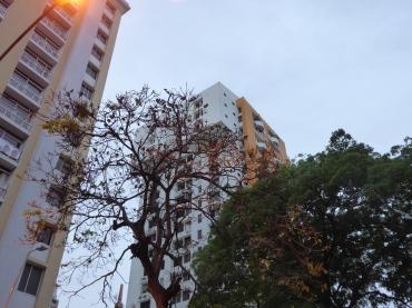 Papageien im Schlafbaum