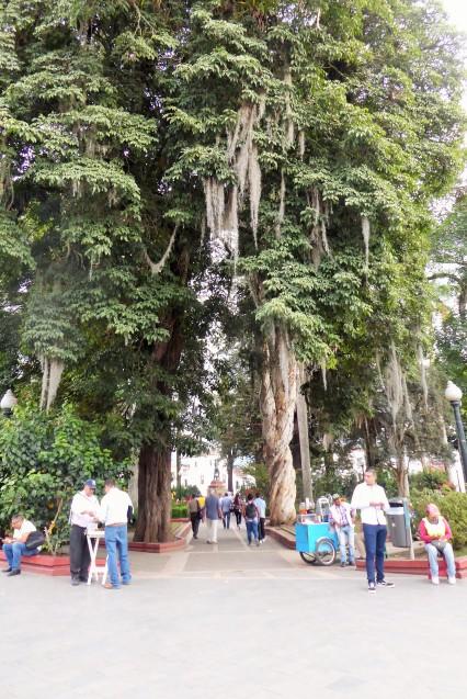 Baum mit Lousiana-Moos